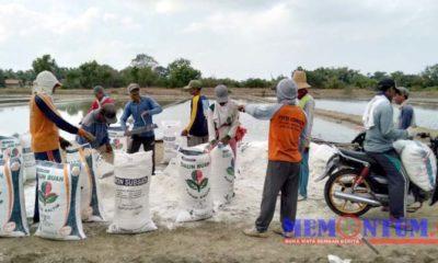 Petani garam saat panen di Desa Aeng Sareh Kecamatan Sampang. (zyn)