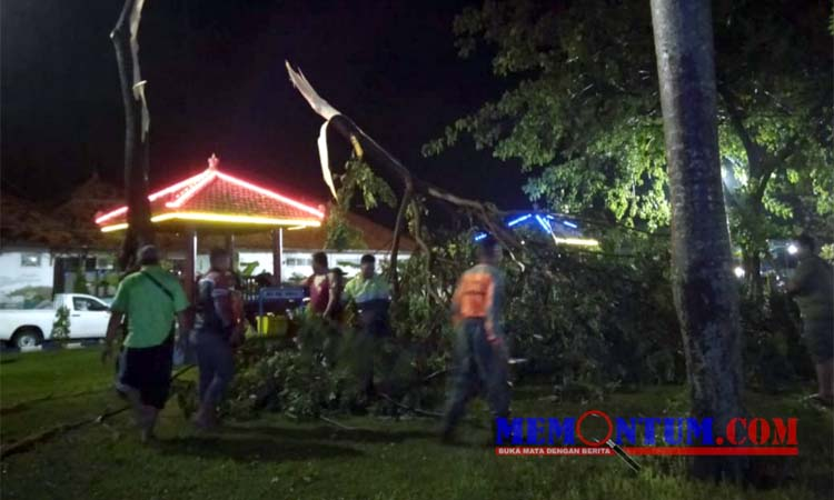 Petugas saat mengevakuasi pohon tumbang di Taman Wijaya Kusuma. (zyn)
